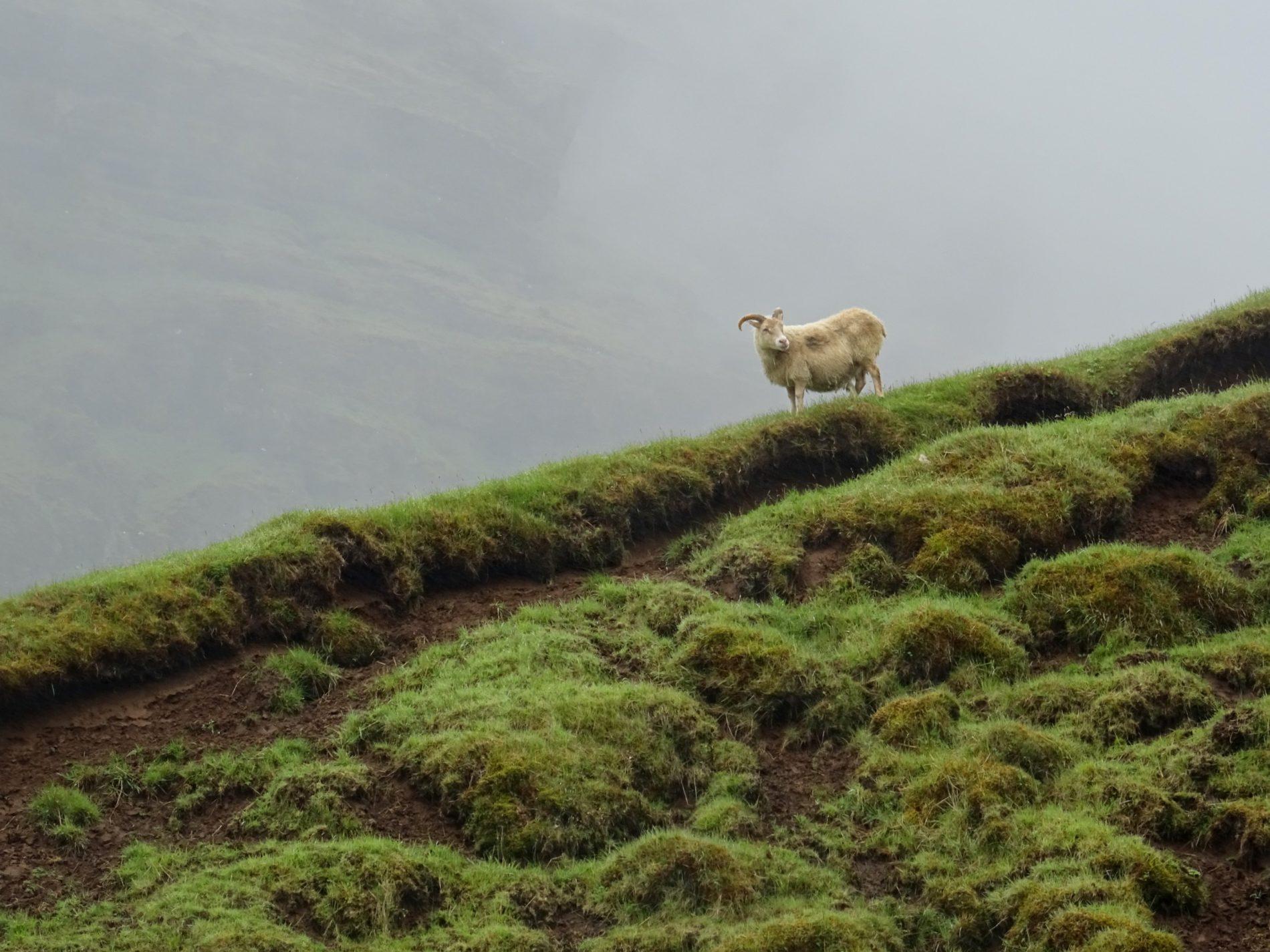 Lopapeysa – kultowy islandzki sweter